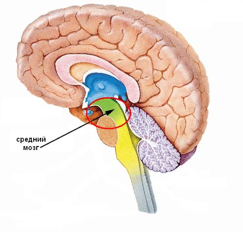 Как связано развитие мозга и совершенствование труда 5