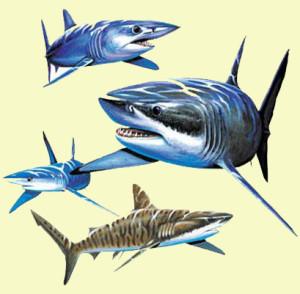 загадки про акулу